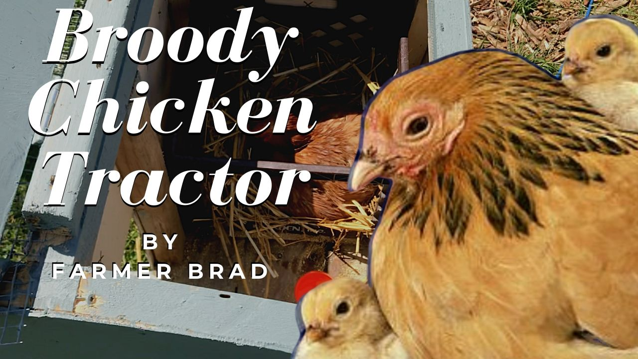 Broody Chicken Tractor