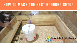 How to make the Best Brooder