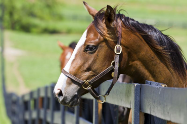 5 Things to Look for When Deciding Where to Board a Horse