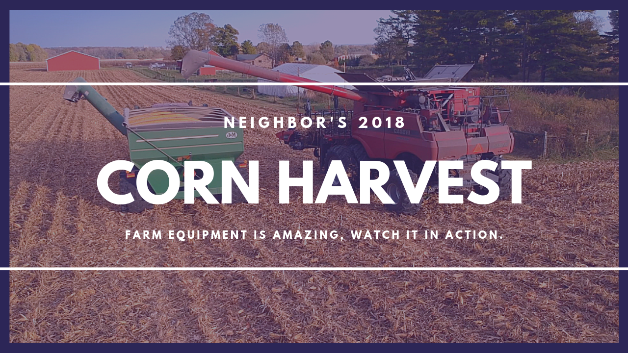 Neighbor Harvests Corn