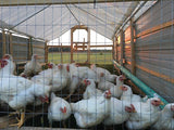 Pastured Poultry Down Payment ($8 per whole chicken)