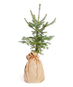 The Jonsteen Company Living Christmas Tree | Seed Grow Kit - Farmer Brad LLC