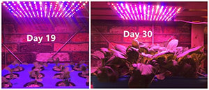 ACKE LED Panel Grow Light, Plant Light PCBA, Hydroponic Grow Light,LED Grow Light Aluminum Board for Greenhouse,Grow Light Stand, Vegetative Growth of Seedling, Flowers, Herbs - Farmer Brad LLC