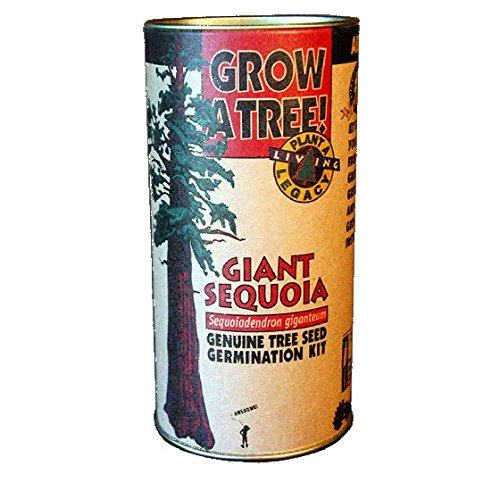Tree Growing Kit - Giant Sequoia - Farmer Brad LLC