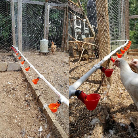 30 Pcs Poultry Feeding Chicken Quail Automatic Drinking Bowl Yellow Nipple Farm Poultry Drinking Water System poultry farming - Farmer Brad LLC
