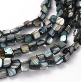 Erose Shell Beads Strands, Dyed, Gray, about 8mm long, 8mm wide, about 50pcs/strand