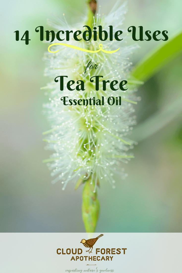 14 Incredible Uses for Tea Tree Essential Oil