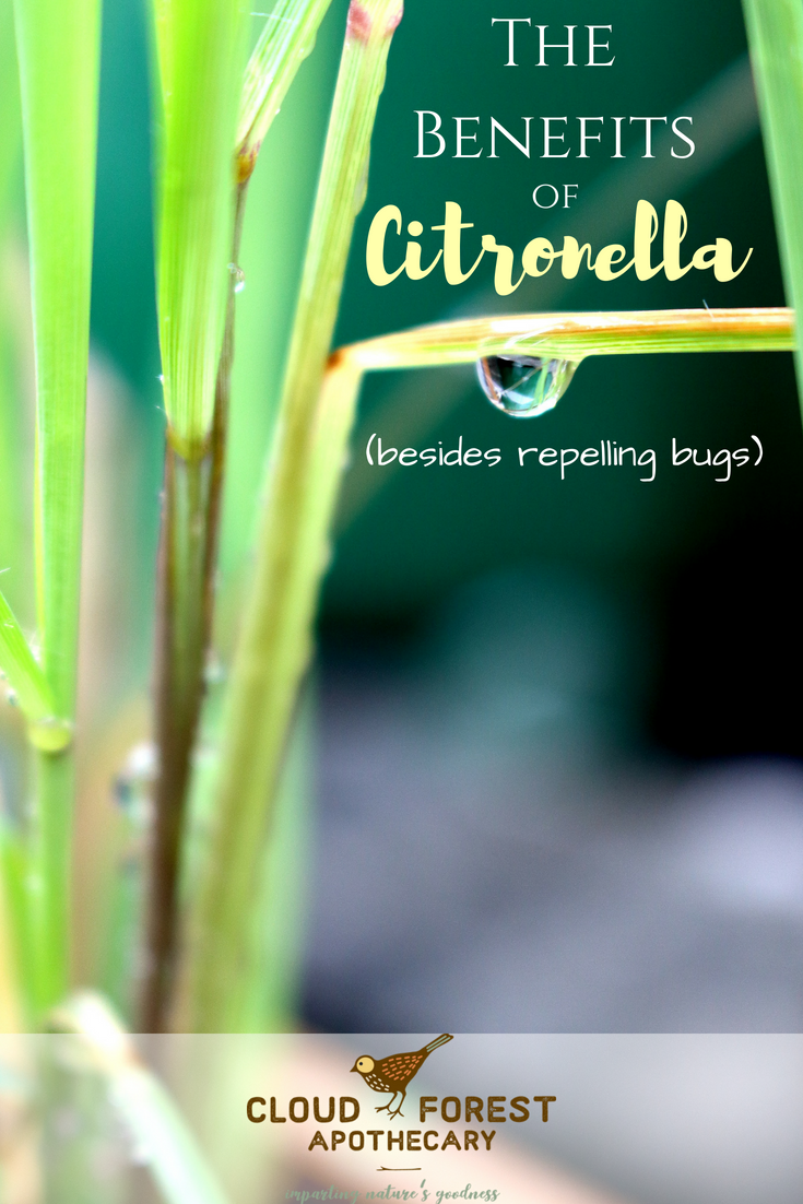 The Benefits of Citronella (Besides Repelling Bugs)