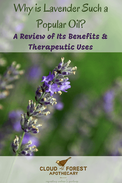 Why is Lavender Such a Popular Oil? A Review of Its Benefits & Therapeutic Uses