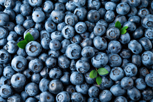 Antioxidants In Blueberries Improve Brain Function In Older Individuals