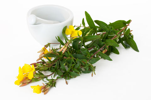 Powerful Properties Of Evening Primrose Oil
