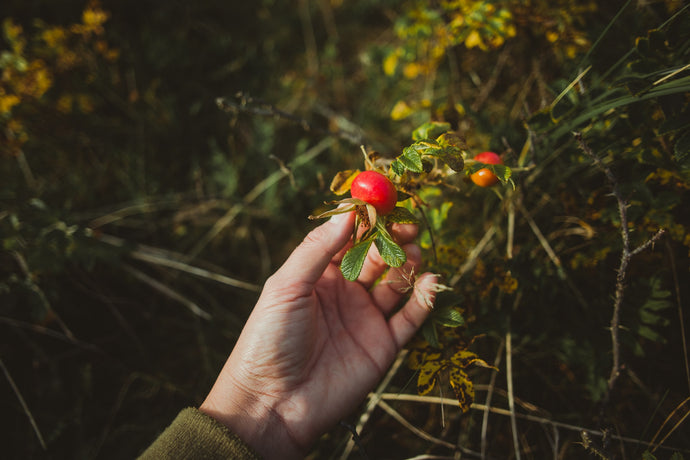 Rosehip Oil Benefits For Your Skin