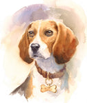 Beagle Fabric, Watercolor Beagle Head and Shoulders, 2076 - Beautiful Quilt