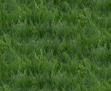 Grass Fabric Elizabeth Studio Fabric Landscape Medley green 2858