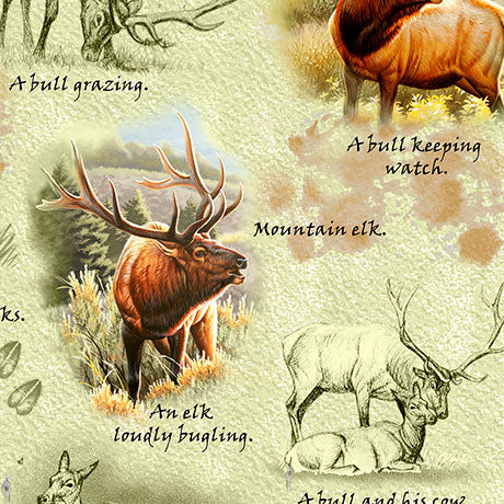 Wildlife Fabric Elk Fabric Mountain Elk Realistic Elk 5326 - Beautiful Quilt