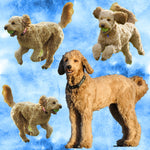 Dog Fabric, Goldendoodle Fabric, Cotton or Fleece 2131 - Beautiful Quilt