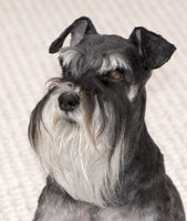 Schnauzer Fabric, Grey Schnauzer Fabric Head Panel 1499 - Beautiful Quilt