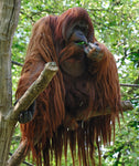 Asian Animal Fabric, Orangutan Fabric, 1337 - Beautiful Quilt