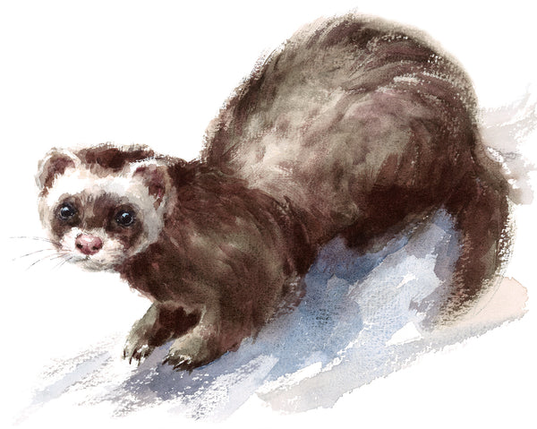 Wildlife Fabric, Watercolor Ferret Fabric Panel, Cotton or Fleece 1453