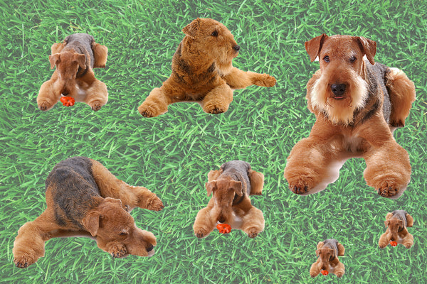 Dog Fabric, Airedale Fabric allover, Cotton or Fleece 1543 - Beautiful Quilt