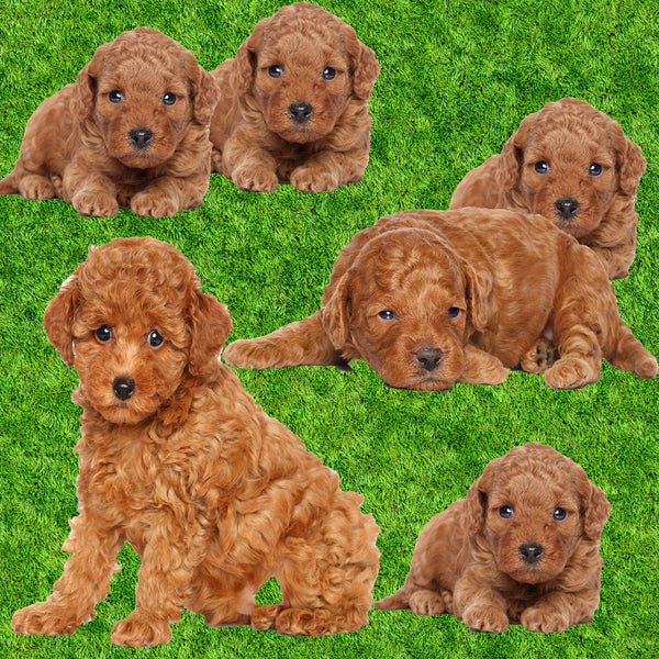 Dog Fabric, Apricot Poodle Fabric, Puppy Cut, Cotton 1484 - Beautiful Quilt