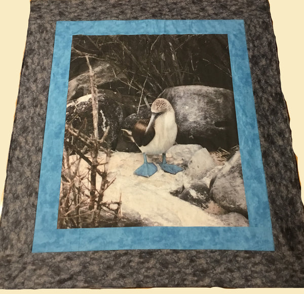 Blue Footed Booby Quilt, not for sale 2502 - Beautiful Quilt