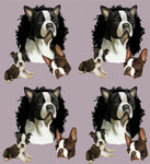 Dog Fabric, Boston Terrier on Purple, Cotton or Fleece 2126 - Beautiful Quilt
