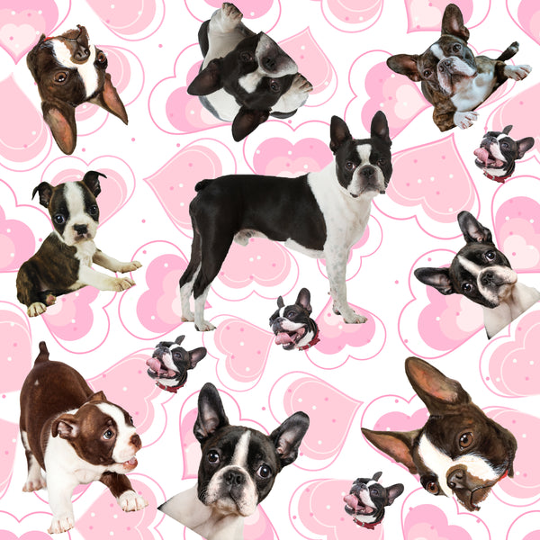 Dog Fabric, Boston Terrier Fabric, on a Heart Background, Cotton or Fleece 2125 - Beautiful Quilt