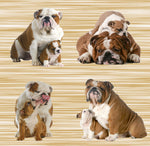 Dog Fabric, Bull Dog Fabric on Beige, Cotton or Fleece 3028