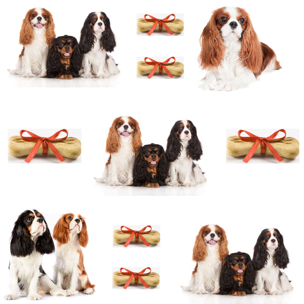 Dog Fabric, Cavalier King Charles Fabric yardage, Cotton or Fleece 1698 - Beautiful Quilt