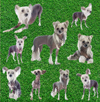 Dog Fabric, Chinese Crested Dog Fabric, Yardage, Cotton or Fleece 1860