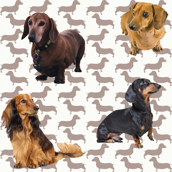 Dog Fabric, Dachshund Fabric, Doxie Fabric, All Doxie Fabric 1363 - Beautiful Quilt