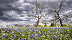 Landscape Fabric, Custom Print Panel, Texas Stormy Bluebonnet Field 5825 - Beautiful Quilt