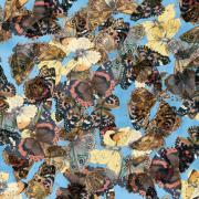 Butterfly Fabric Camelot Fabric Country Diary blue 2801 - Beautiful Quilt