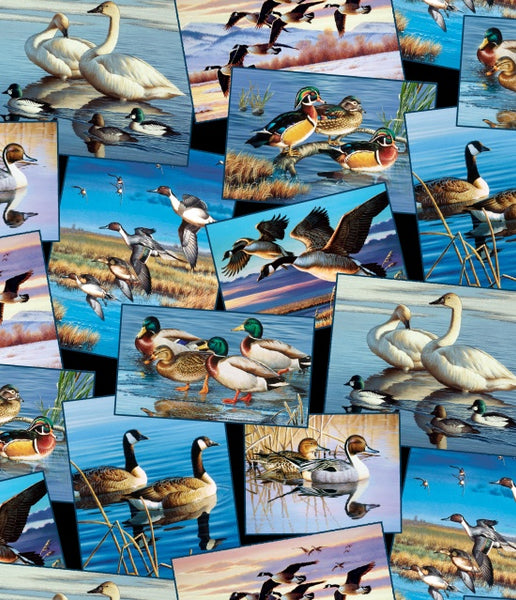 Bird Fabric, Waterfowl Collection,  Loon and Duck Fabric 5068 - Beautiful Quilt