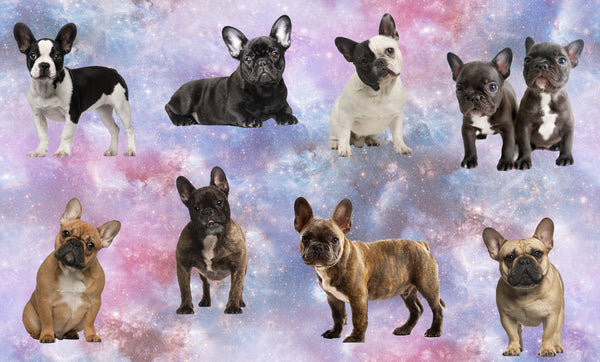Dog Fabric, French Bulldog Fabric, aka Frenchies, All Colors, Cotton or Fleece, 3355 - Beautiful Quilt