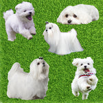 Dog Fabric, Maltese Fabric, Cotton or Fleece 2009
