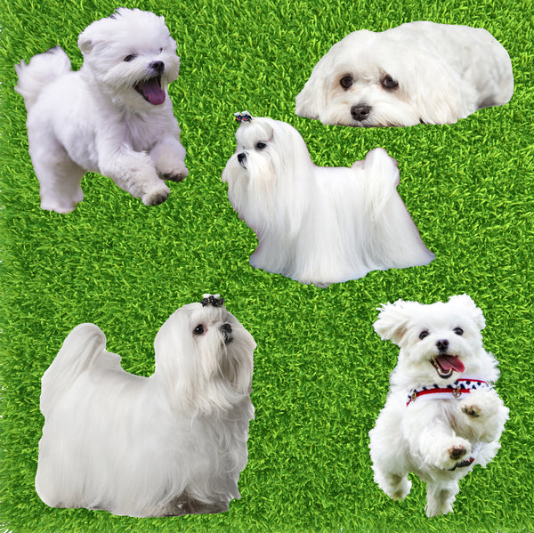Dog Fabric, Maltese Fabric, Cotton or Fleece 2009 - Beautiful Quilt