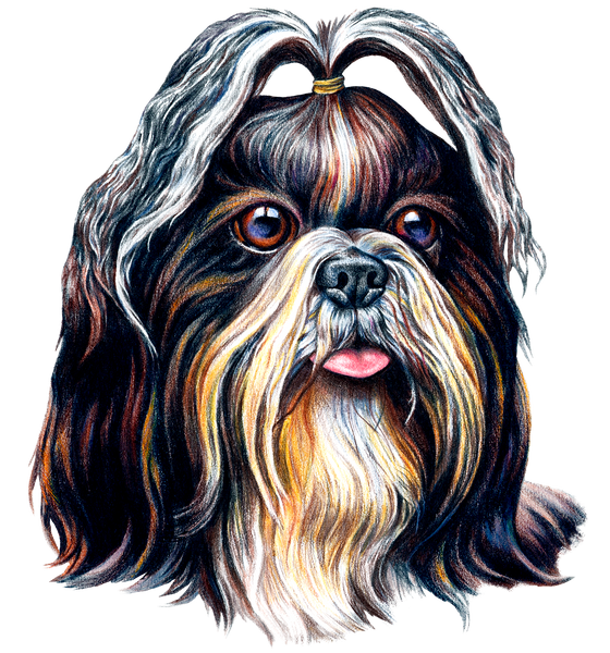 Dog Fabric, Shih Tzu Fabric, Face 1536