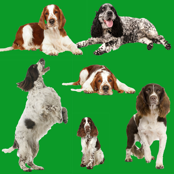 Dog Fabric, Springer Spaniel Fabric on Green 1881