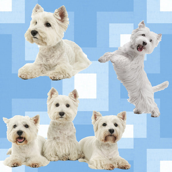 Dog Fabric, Westie Fabric on Blue, Cotton or Fleece, 3786 - Beautiful Quilt