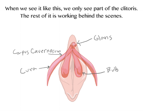 the clitoris is embedded in the vagina and vulva