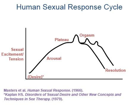 The Human Sexual Response Cycle, study results from Masters and Johnson