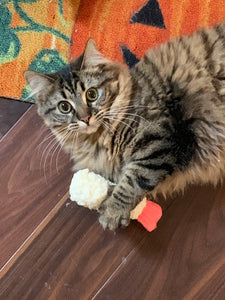 Shrimp Tempura Stuffed Cat Toy with Catnip