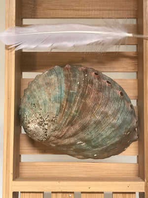 Abalone Shell with Feather ~ Set of 2