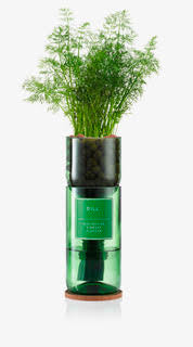 Hydro-herb Kit - Dill