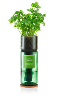Hydro-herb Kit - Flatleaf Parsley