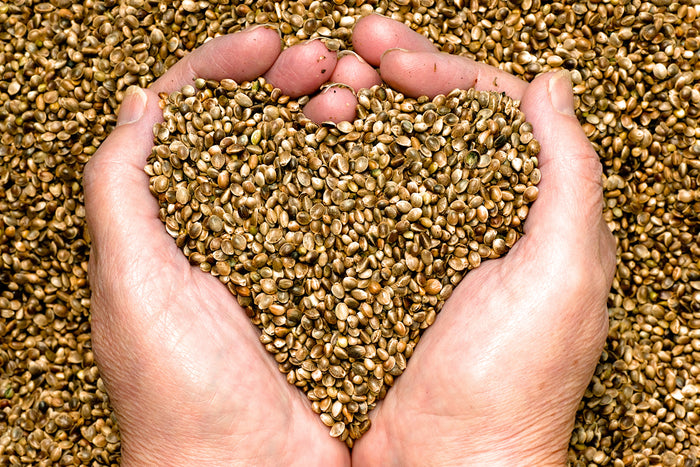 Benefits of Eating Raw Hemp Seeds