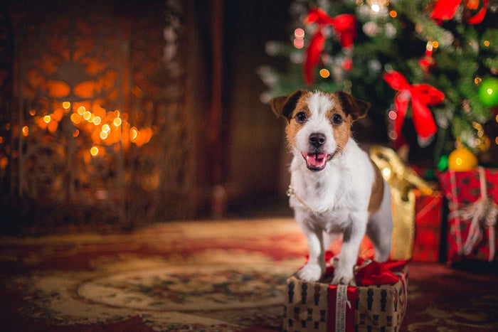 How to prep your home for Christmas with a pet