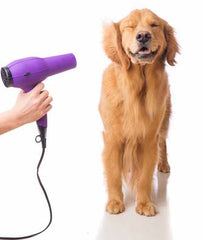 dog hairdryer